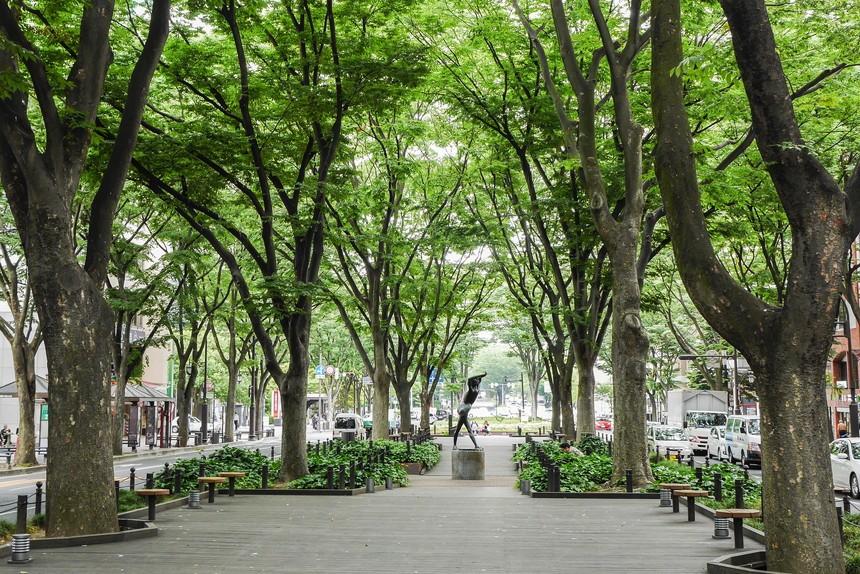 仙台の街路樹 定禅寺通 ケヤキ並木