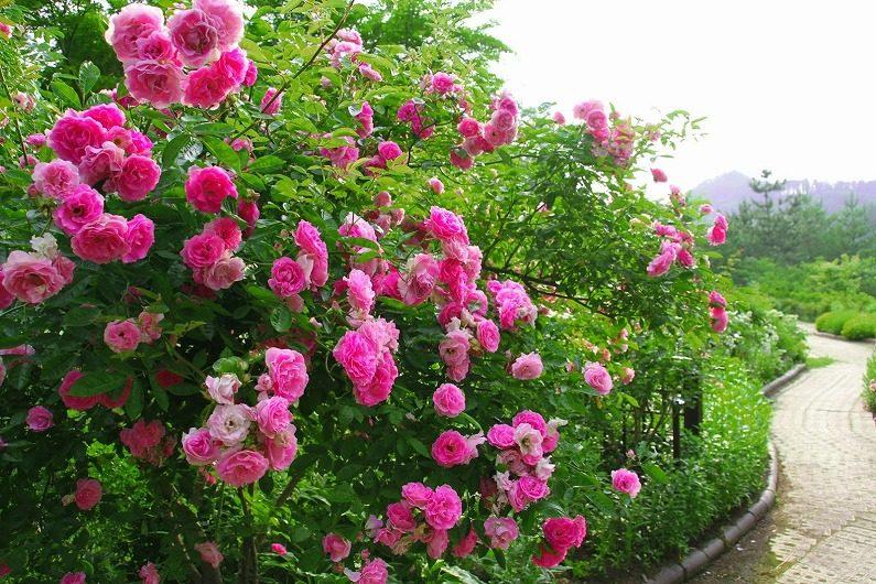 仙台市泉区 七北田ダム湖畔・花自然植物園 泉ボタニカルガーデンに行ってきました